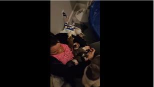 ¡Esta perrita conmueve en las redes sociales por esta razón! [VIDEO]