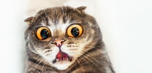 Esta es la broma de YouTube más aterradora para los gatos [VIDEOS]