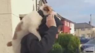 ¿Harías esto mismo con tu mascota en una bicicleta? [VIDEO]