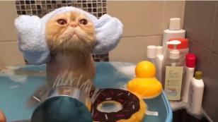 ¡Mira cómo estos dueños engríen a su gato! [VIDEO]