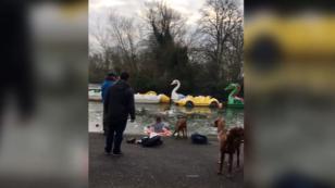 ¡Mujer se lanza a un lago para salvar a un perrito! [VIDEO]