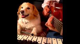 YouTube se rinde ante este perrito tocando instrumentos junto a su dueño [VIDEO]